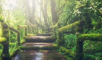 Laat lucht en groen(te) toe in je leven
