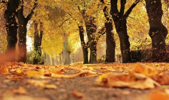 10 reasons to start running in the fall!